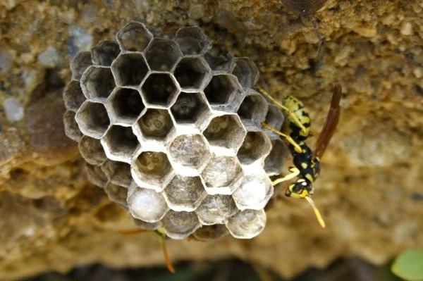 kleines wespennest entfernen tipps