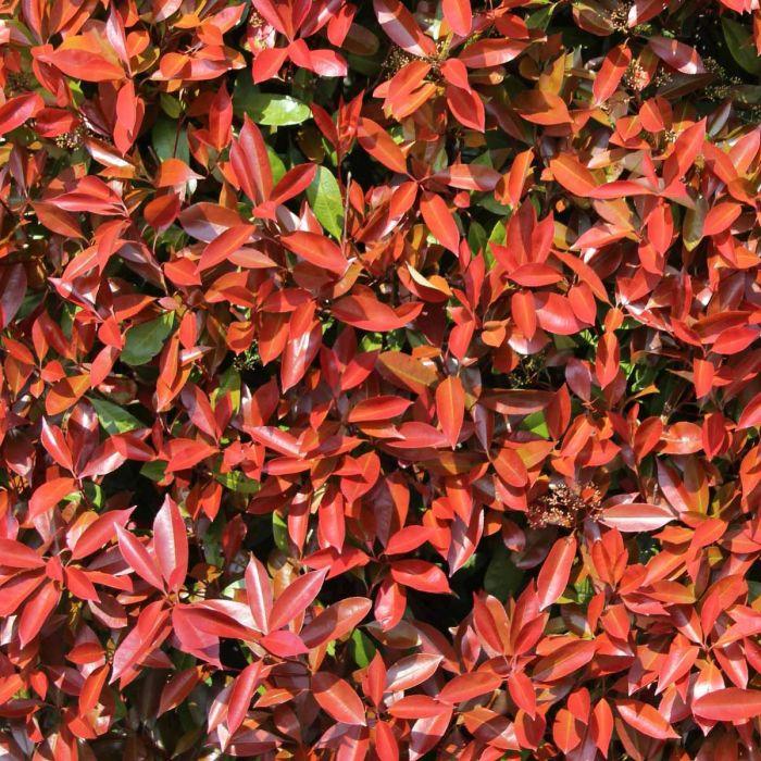 moderne Gartengestaltung grelle Blätter