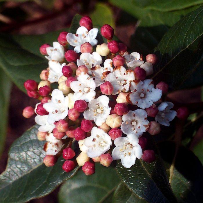moderne Gartengestaltung mit Beeren in rot und weiß