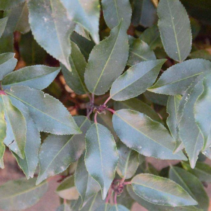 moderne Gartengestaltung - tolle eckige Blätter