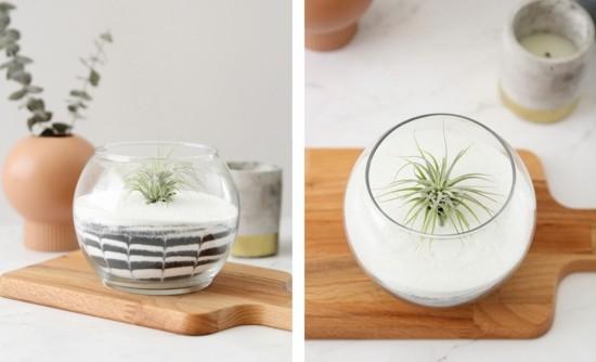 rundes glas tillandsien geschenkidee