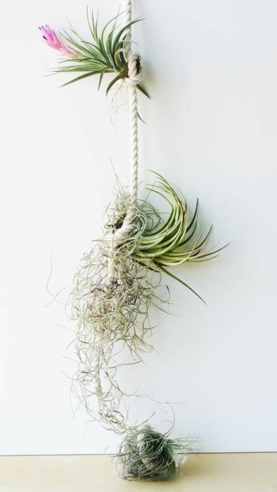seil tillandsien hängende deko