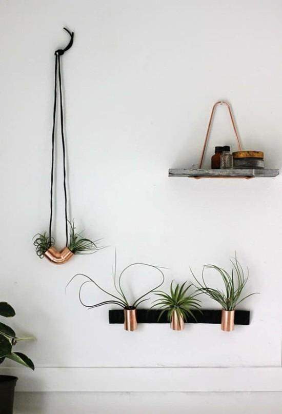 tillandsien kupfer minimalistische wanddeko