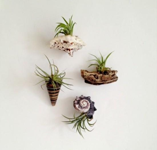 tillandsien luftpflanzen deko ideen