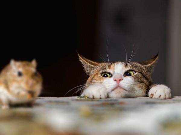 wühlmäuse bekämpfen mit natürlichen fressfeinden katzen