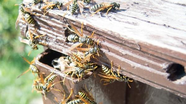 wespennest entfernen lassen von profis