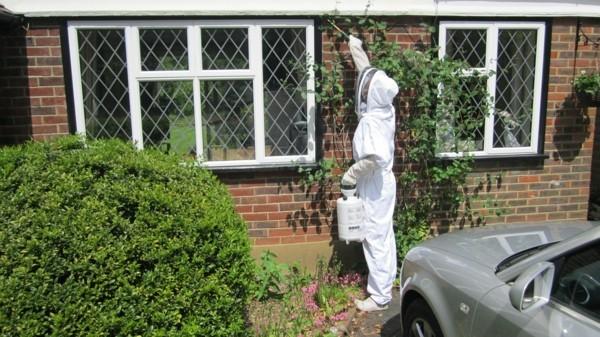 wespennest entfernen von kammerjägern