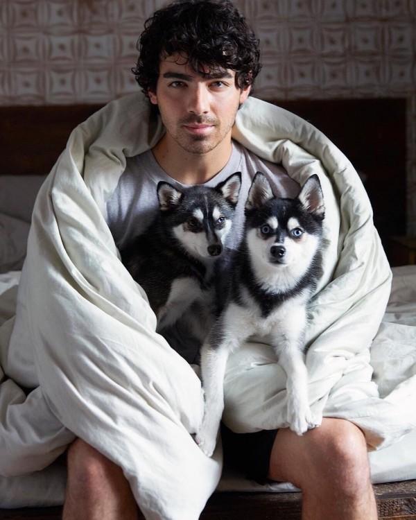 zwei hunde mit joe jonas