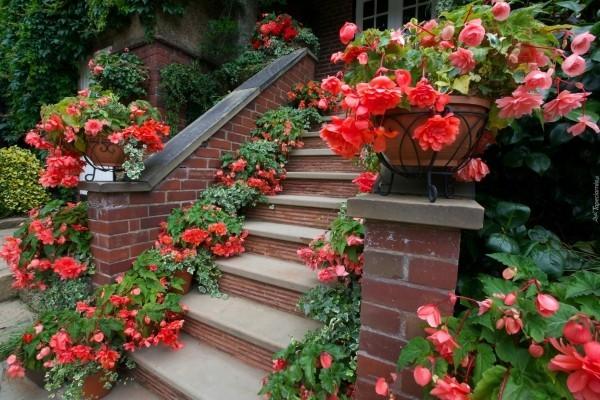 Begonien viele Blüten rot und rosa viele Töpfe Garten in Wohlfühloase verwandeln