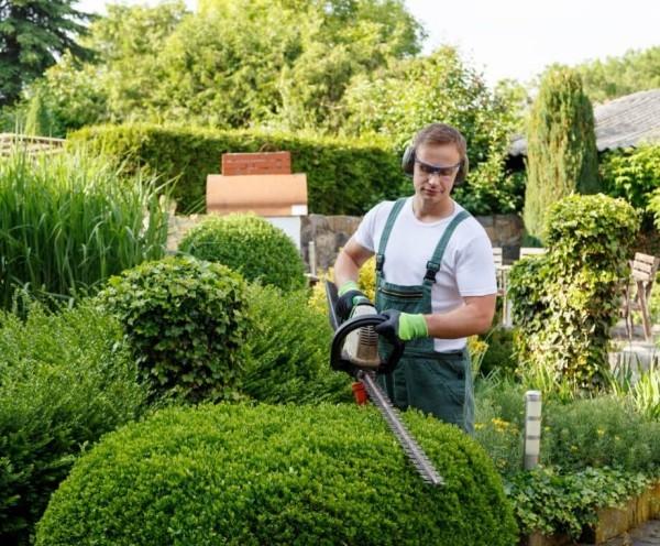 Garten im Herbst Was jetzt zu tun ist büsche und hecken schneiden