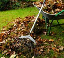 Garten im Herbst: Was jetzt zu tun ist