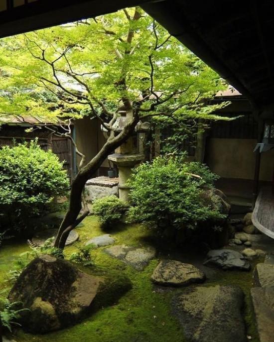 Japanischer Garten im Hinterhof Moos Steine Baum grüne Sträucher
