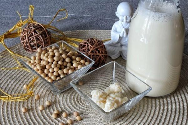 Kefir gesund Wasserkefir Milchkefir probiotische Lebensmittel Kefirknollen