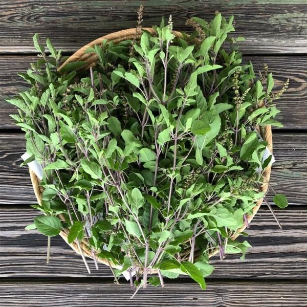 Tulsi Tee Tulsi Pflanze Tulsi Blätter Königsbasilikum