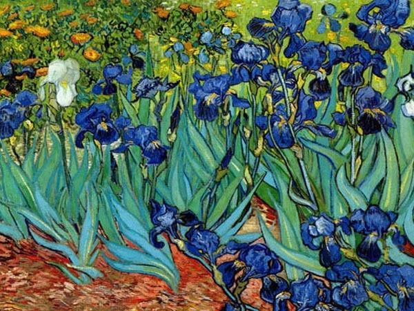 Van Gogh größter niederländischer Maler Blue Irises Mai 1889 sichtbare Pinselstriche