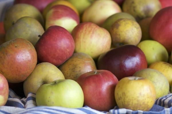 alte apfelsorten bio und gesund