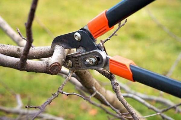 apfelbaum schneiden tipps und tricks