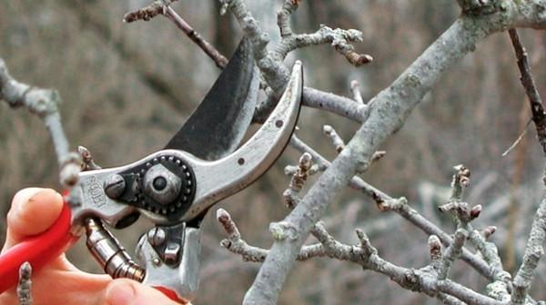 apfelbaum schneiden tipps