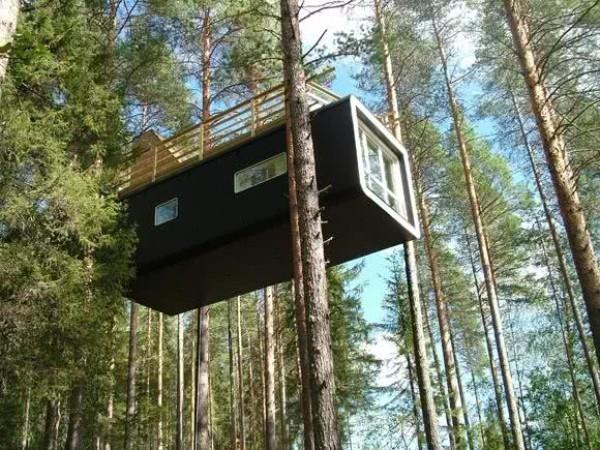 baumhaus wald mit hohen bäumen