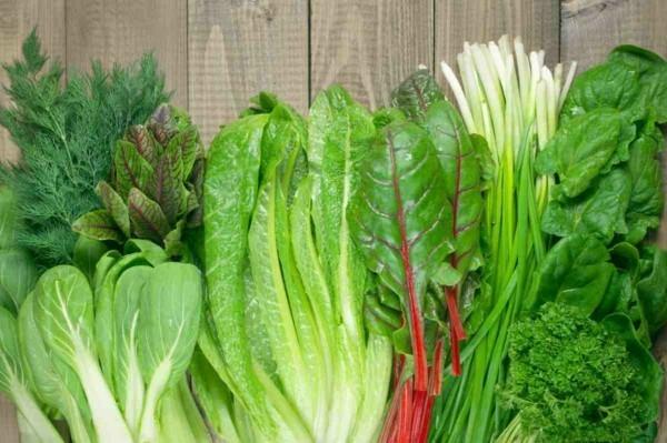 kopfsalata mangold folsäure wirkung