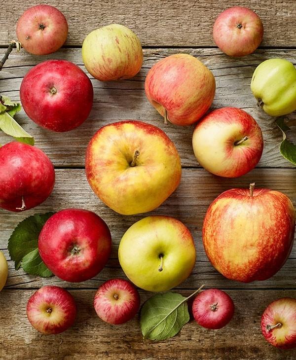 leckere alte apfelsorten gesund