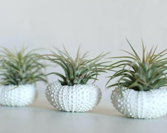 mini vasen aus seeigel gehäuse selber machen