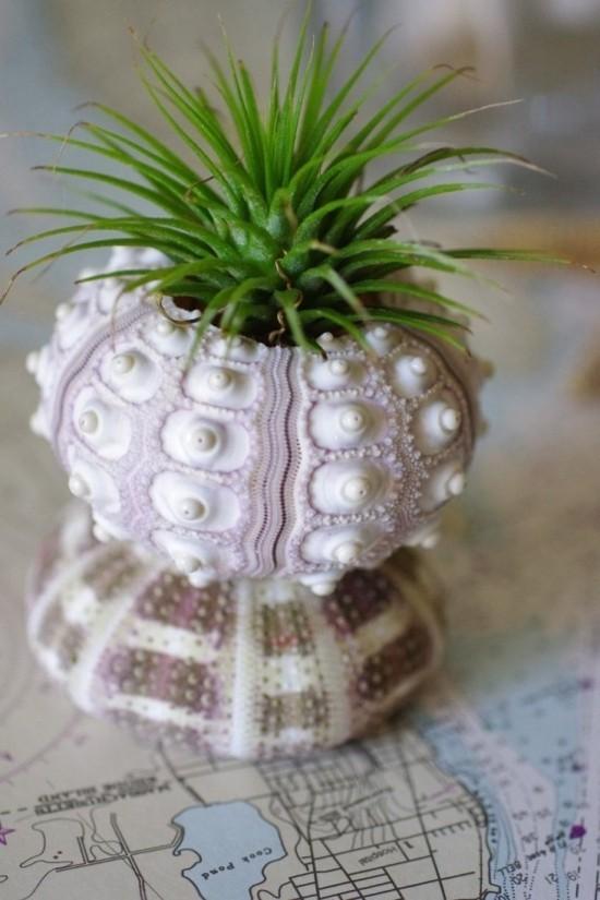 seeigel deko ideen mit luftpflanze