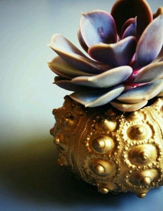 seeigel sukkulenten vase mit gold selber machen