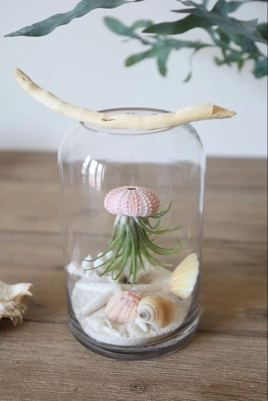 seeigel terrarium selber bauen deko ideen