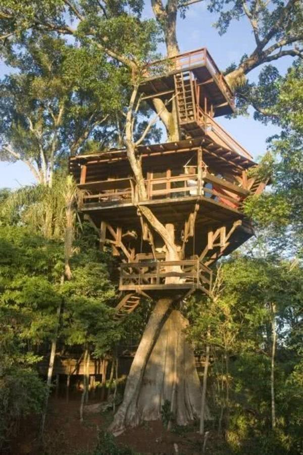 sehr hohes baumhaus mitten in exotischer Natur