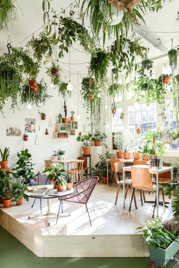zimmerpflanzen deckengestaltung urban jungle