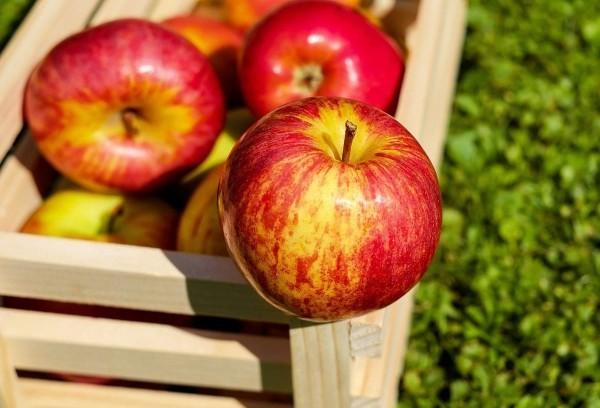 Apfel Äpfel gesund - reif und schön