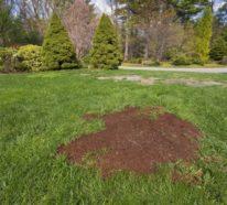 Rasen säen im Herbst? Hier sind die Vor-und Nachteile und einige Tipps dazu