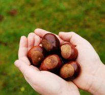 Maronen Zubereitung: die gesunden Nussfrüchte kann man sowohl rösten als auch kochen