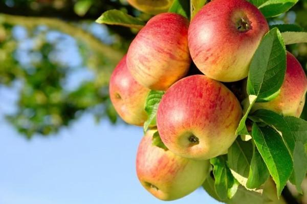 Rezept Apfel Crumble Äpfel Apfelbaum