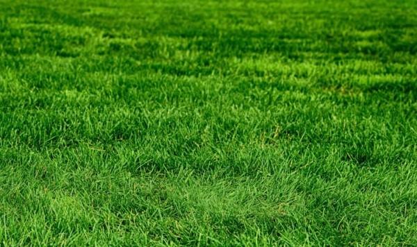 dunkelgrüner Rasen - Gartengestaltung tipps