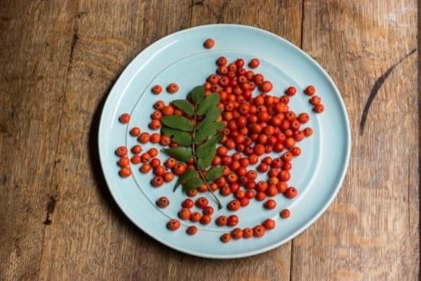 frucht der eberesche gesund