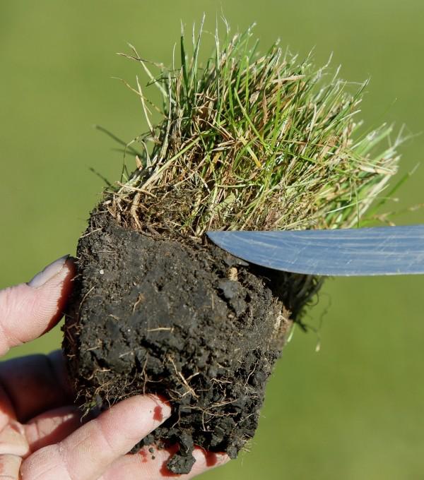 kleine anwachsende pflanzen Gartengestaltung tipps