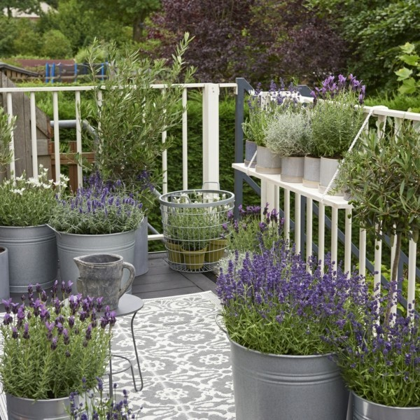 lavender lavandula angustifolia winterharte balkonpflanzen