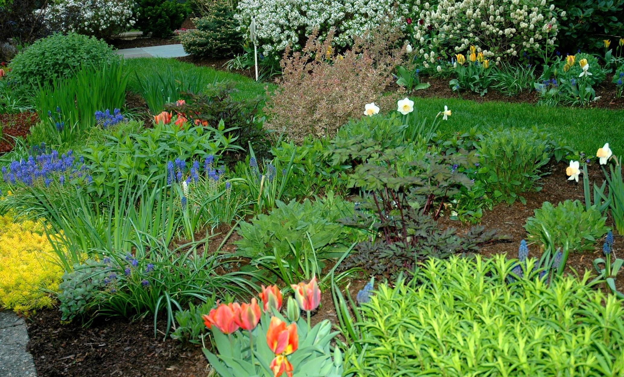 naturgarten - sehr viele grünen pflanzen
