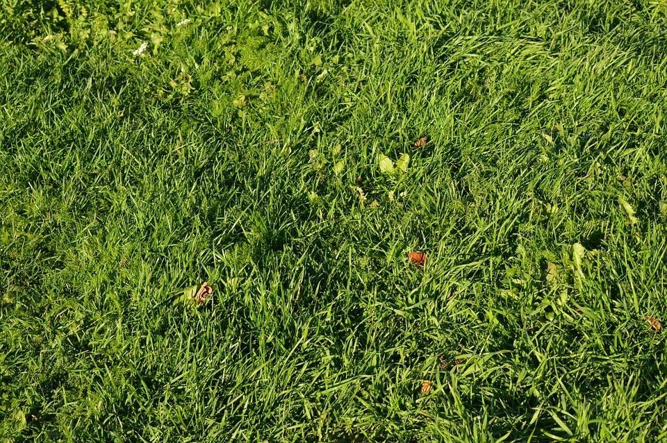 Rasen Säen Im Oktober : rasen s en im herbst hier sind die vor und nachteile und ~ Watch28wear.com Haus und Dekorationen