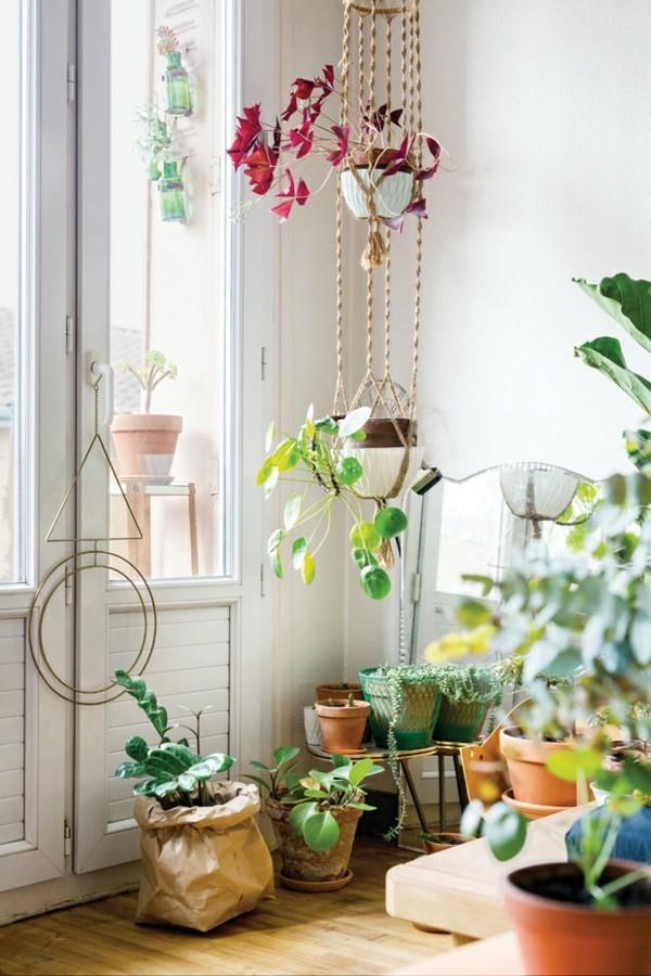 urban jungle zimmerpflanzen fürs wohnzimmer