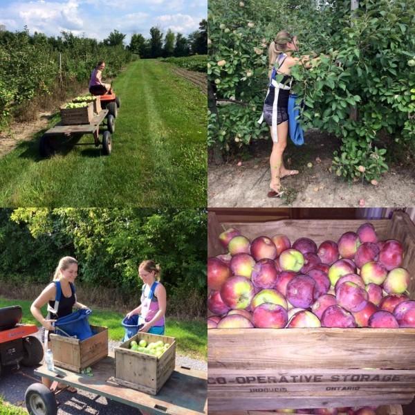 viele Damen Apfel Äpfel gesund