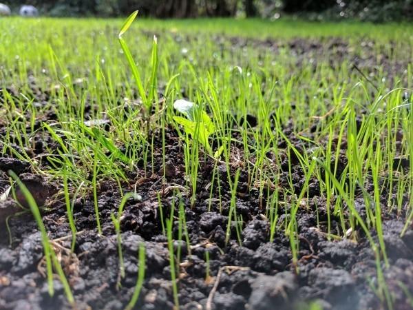 wachsendes gras Gartengestaltung tipps