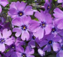 10 winterharte Balkonpflanzen, die uns auch in der kalten Jahreszeit verzaubern