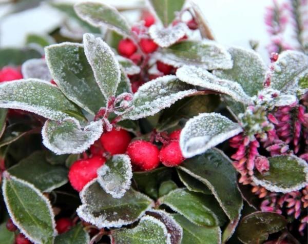 winterharte balkonpflanzen tipps