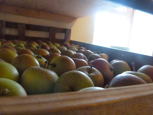 wundervolle Apfel Äpfel gesund