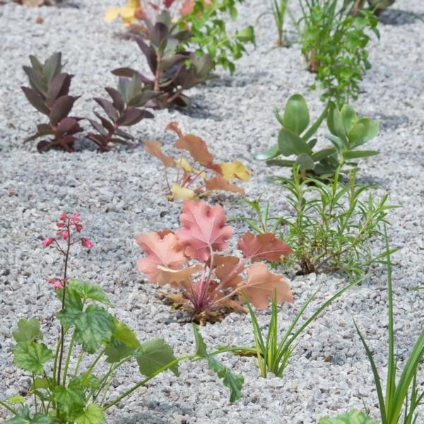 Kiesgarten anlegen Vorteile Splitt Gartensteine Schotter Pflanzen