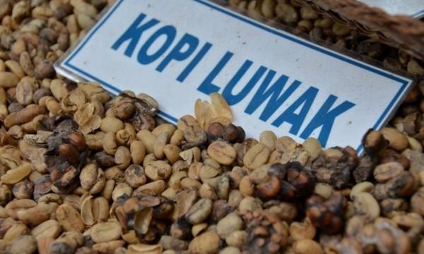 Kopi Luwak Kaffee Preis Katzenkaffee teuerster Kaffee Indonesien