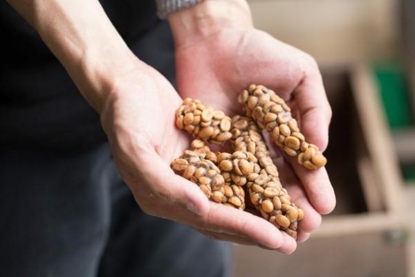 Kopi Luwak Kaffee kaufen Katzenkaffee teuerster Kaffee Kackkaffee Kot